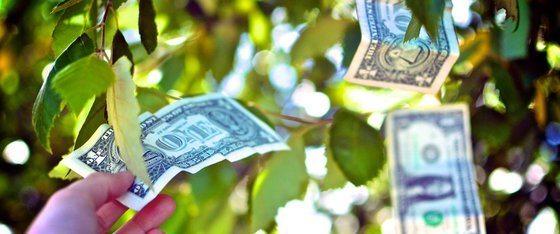 As trees grow, so grows the economy