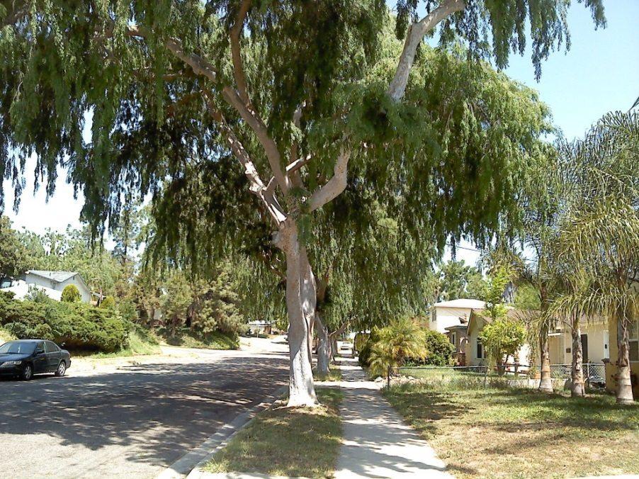 santee street