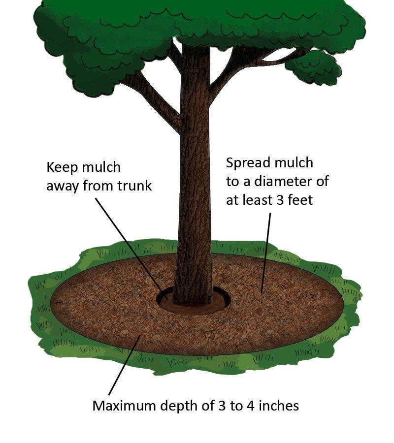 tree_mulch