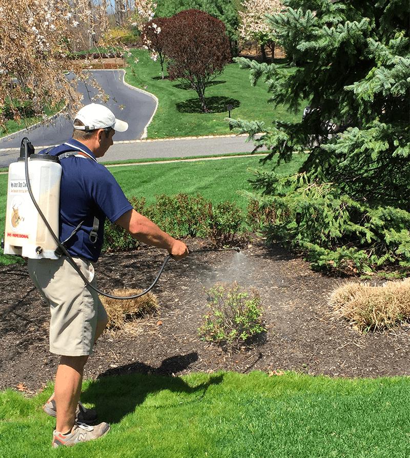 NJ Deer Control spraying services