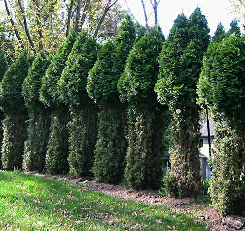Unprotected Trees