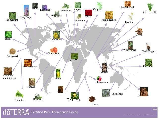 doTERRA Essential Oils Co-Impact Sourcing