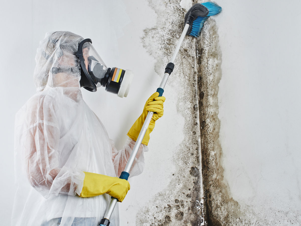 Mold Remediation | Restoration Expert