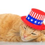 Keeping Pets Safe On The 4th Of July