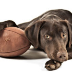 Superbowl Game Day Foods – Hazardous For Pets?