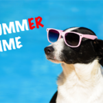 Summer Hazards For Pets