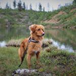 Blue Green Algae Toxicity & Your Dog