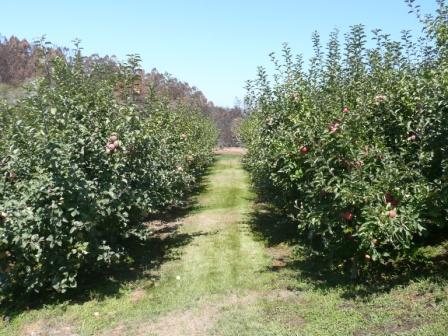 orchard_ground