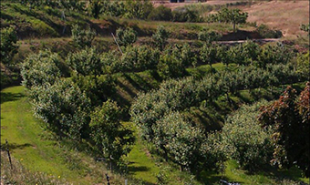 orchard_view3