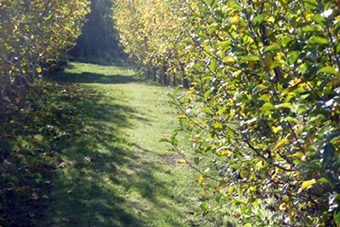 orchard_view4