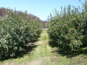 orchard_ground