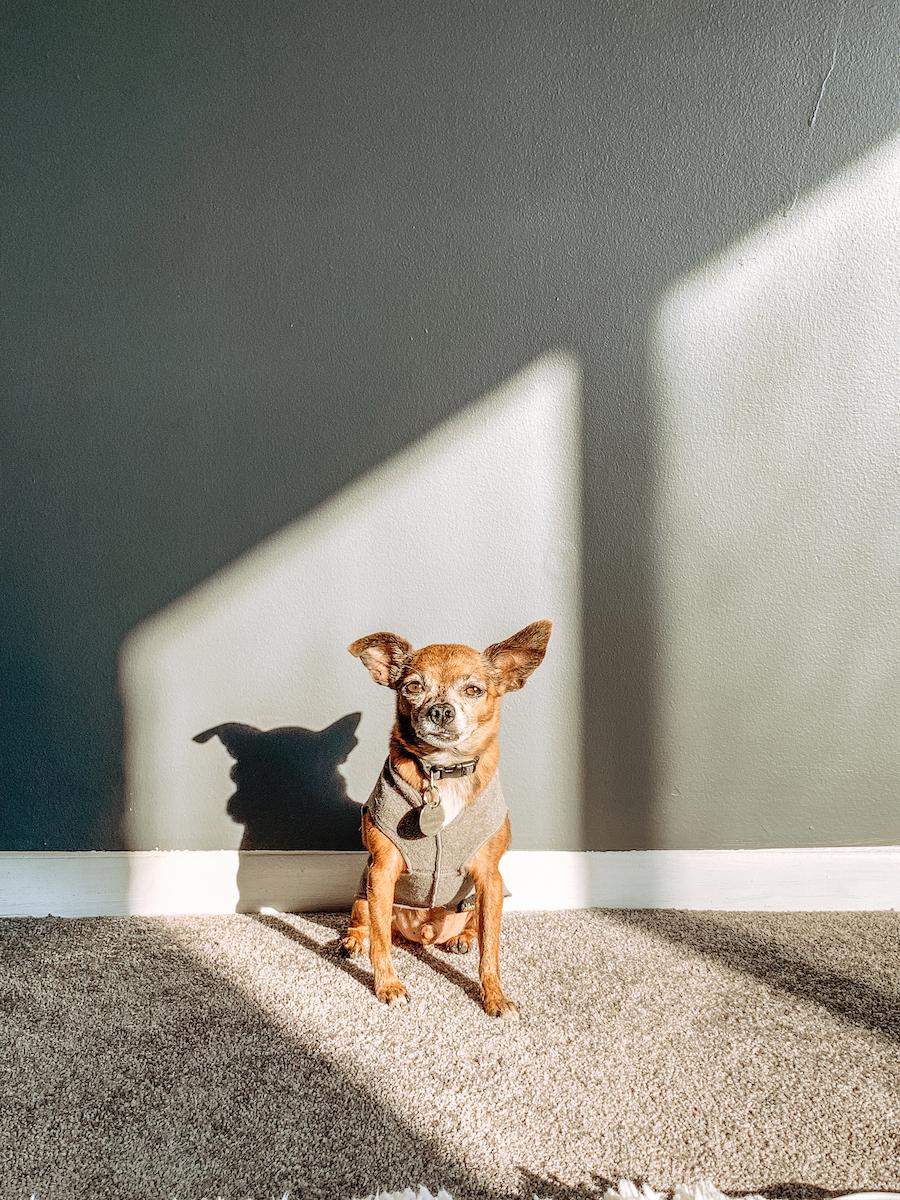 Gold Paw Fleece Dog Mom Guide