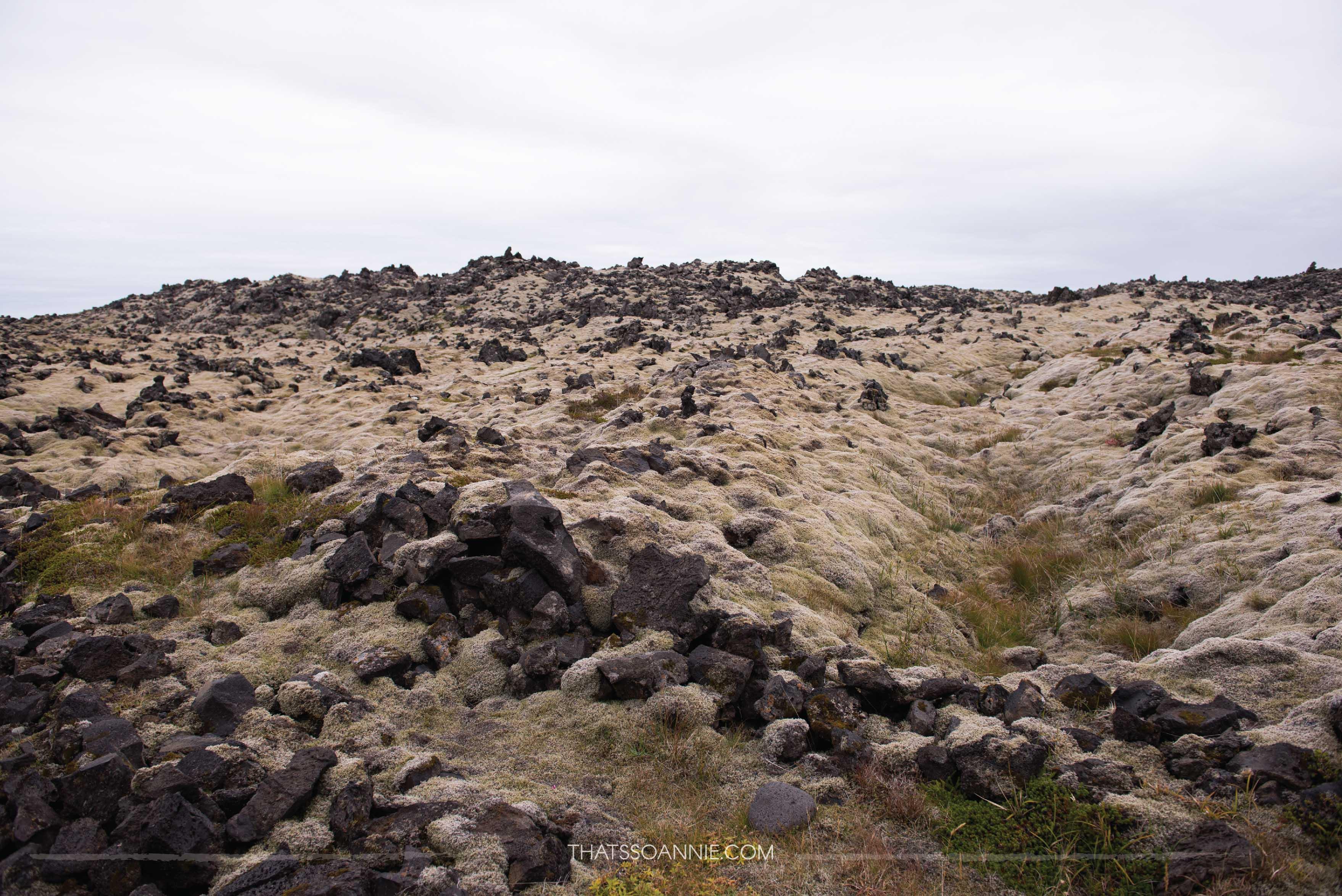 Lava fields while driving towardsDjúpalónssandur, a black pebble beach | Exploring the Snæfellsnes Peninsula, Iceland | www.thatssoannie.com