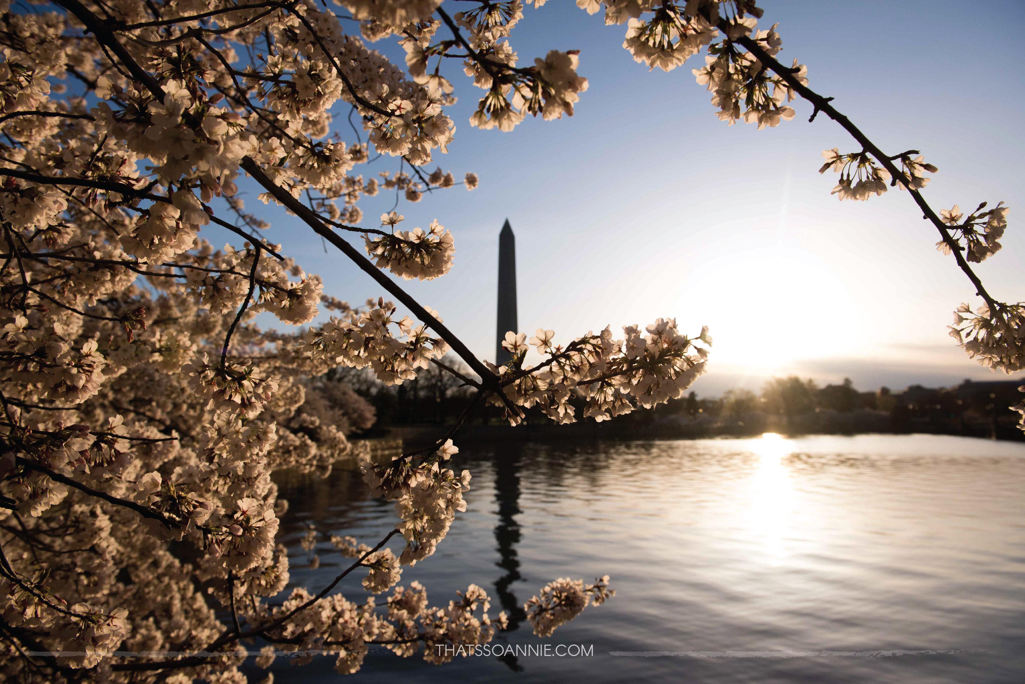 Washington Monument, as seen at dawn from Tidal Basin