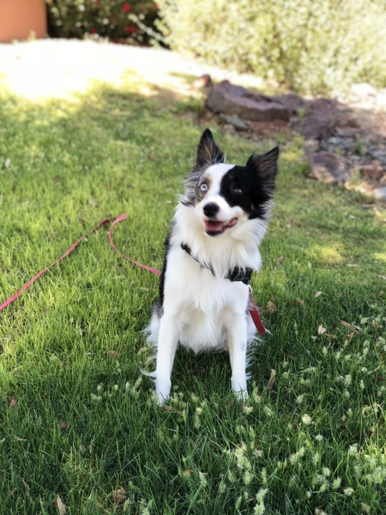 Be Kind To Dogs - Dog Training Call 480-272-8816 for Dog Training in Chandler, AZ, Dog Training in Gilbert, AZ, Dog Training in Tempe, AZ, Dog Training in Mesa, AZ, Dog Training in Ahwatukee, AZ and surrounding areas.