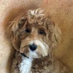 Dog Training Call 480-272-8816 for Dog Training in Chandler, AZ, Gilbert, AZ, Tempe, AZ, Mesa, AZ and surrounding areas