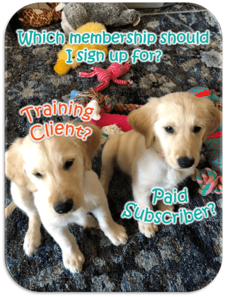 Dog Training Call 480-272-8816 for Dog Training in Chandler, AZ, Gilbert, AZ, Tempe, AZ, Mesa, AZ and surrounding areas Be Kind To Dogs Kathrine Breeden