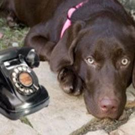 dog training phone consult