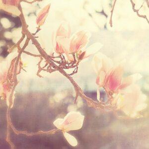 Sunshine-Smile-by-Soffia