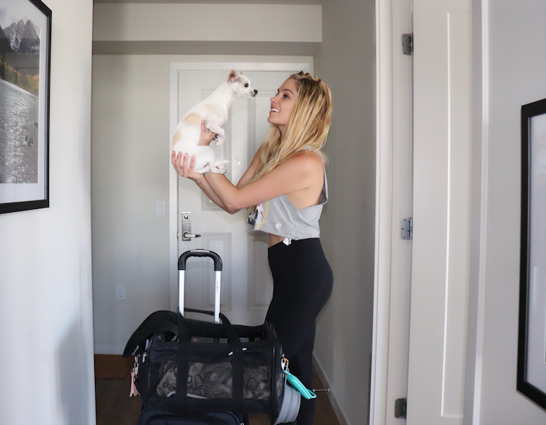 pet essentials Traveling with your pet