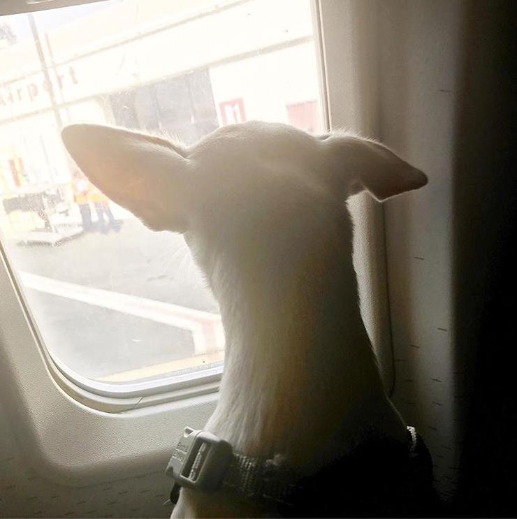 pet travel essentials