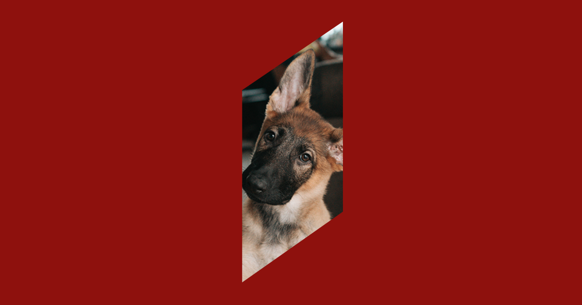 Picture of a dog symbolizing customer loyalty