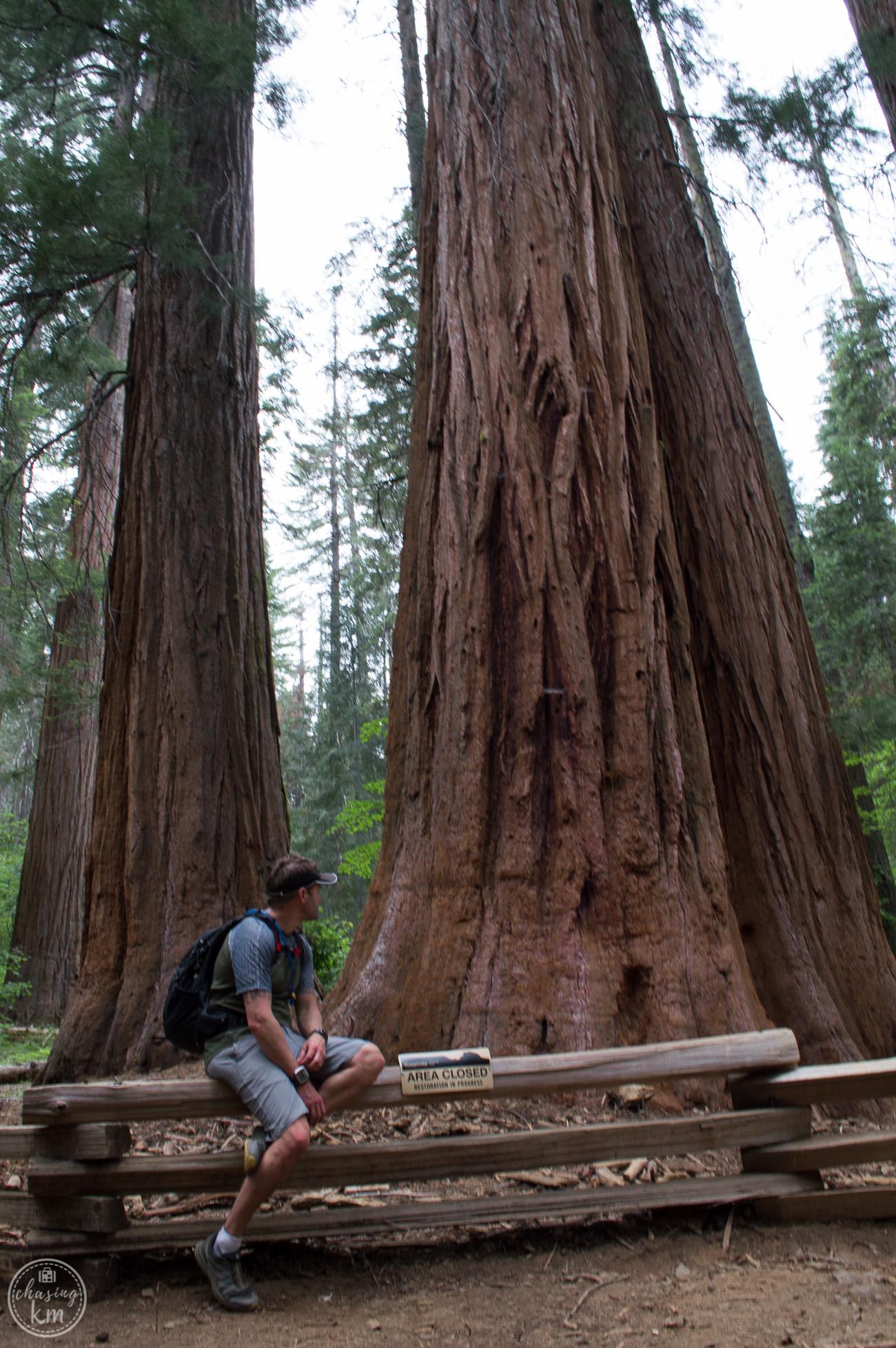 sequoia, yosemite