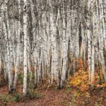 Top 7 Tree Planting Mistakes