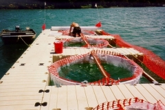 """EZ Docks are  """"green"""" and therefore are used in environmentally sensitive applications such as fish hatcheries and aquariums."""