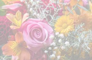 colorful spring flowers in bloom