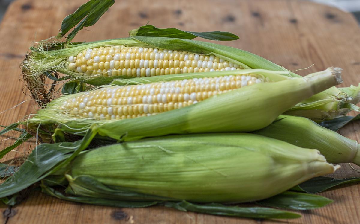 Butter & Sugar Corn from Bartlett's Farm Stand, Salisbury MA