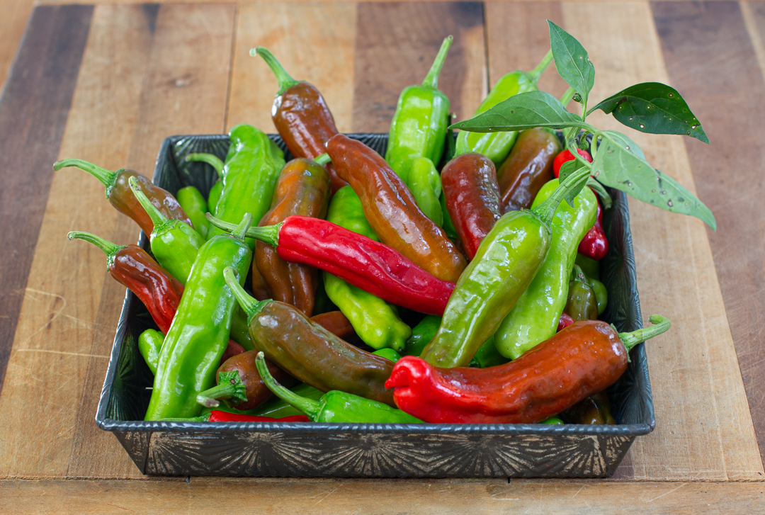 Shishito Peppers from a Farmers' Market - mixed colors