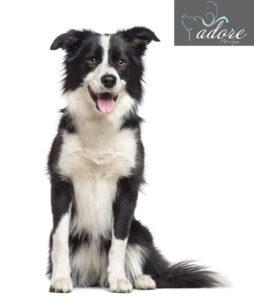 1200-157653960-border-collie-dog-breed