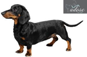 file_23020_dachshund-dog-breed