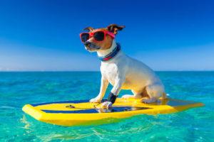 coastal surf trips santa barbara