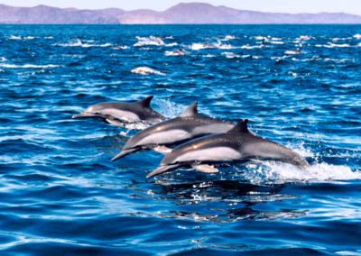 sunset cruise dolphin watching