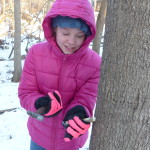 Tapping a Tree
