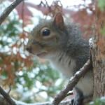 Squirrel Eyeing back