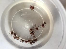 Ticks in solution