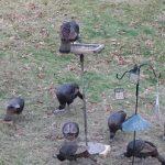 hoards of turkeys.