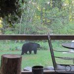 Bear in Yard