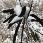Winter seed shapes