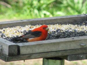 bird on platform feeder
