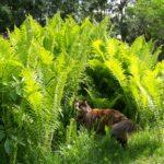 A cat in ferns