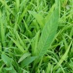 Small prairie plant
