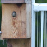 Baby wren looks out of the nest box.