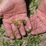 Tiny prairie plant