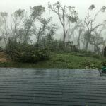 Faulkes Woods Ravaged