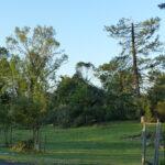 Fallen trees on prairie