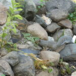 chipmunk and squirrel by pond